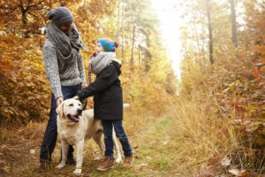 What is a K9 Relationship Coach?